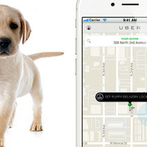#UberPUPPIES Is Back to Deliver Dogs and Cats to Your Home