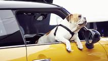English bulldog stars in new MINI commercial