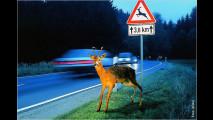 Vorsicht Wildwechsel