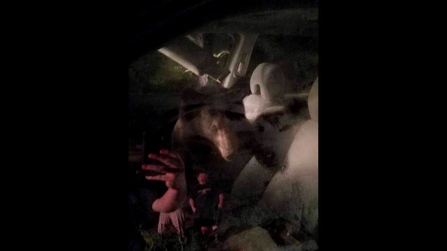Young Bear Seeks Adventure By Locking Itself In A Honda Pilot