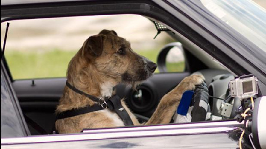 Monty, Ginny, Porter, i cani che guidano