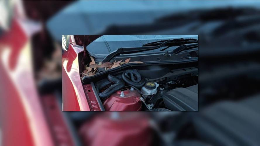 Thoughtful Note Saves Driver From Run-In With Deadly Snake