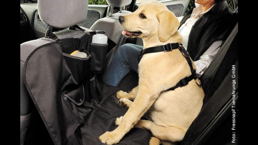 Tipps zum sicheren Autofahren mit dem Hund