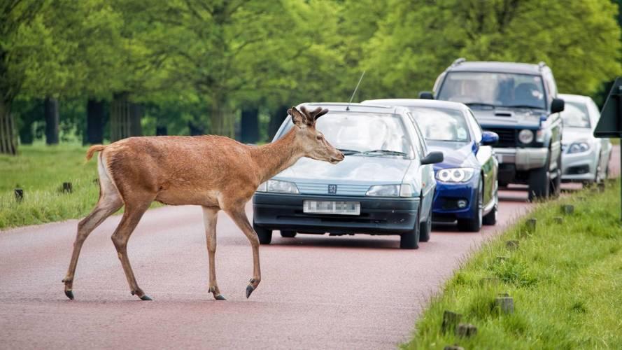 Extra deer vigilance urged as mating season approaches