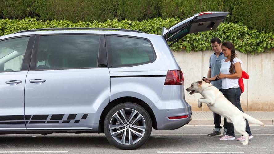 Vacaciones con perros en el coche: los mejores consejos para viajar